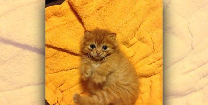 永遠の看板猫ピグモン!白血病と脳障害の中、愛され生き抜いた4年間