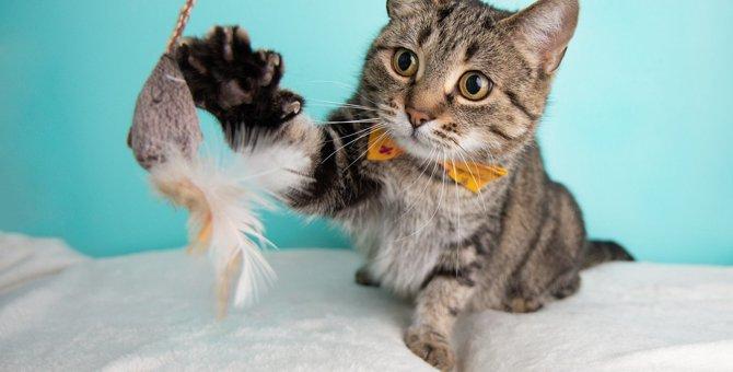 猫が『誤飲』しやすいものランキングワースト5!飼い主が絶対すべき対策とは?