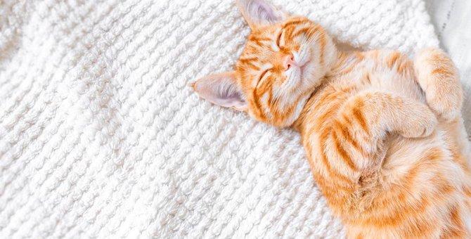 猫が寝ているときに『ピクピク』する原因3つと注意点