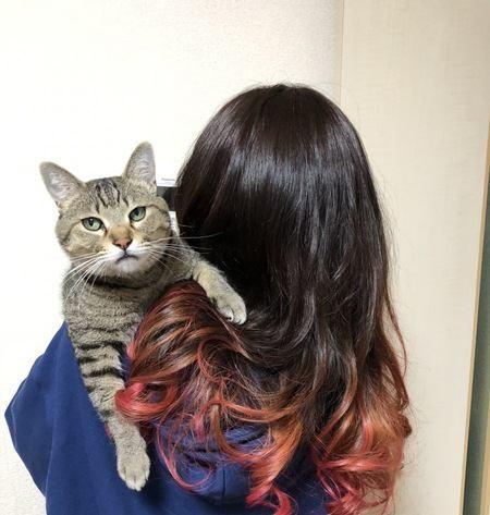 猫が人の髪の毛をなめる3つの理由