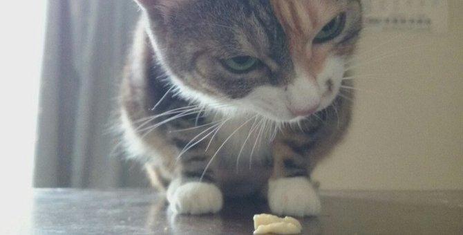 「うむむ?これは…」食いしん坊猫のレイラさん、初めての卵豆腐のご感想は?