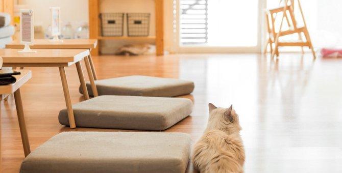 猫の留守番が心配!見守りカメラのメリットとデメリットは?