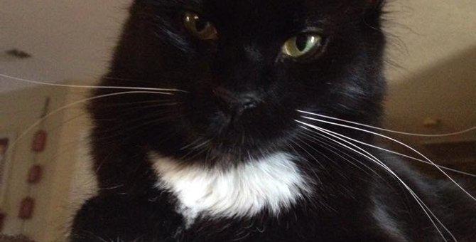 「ペギー」障がいを持った子猫の物語