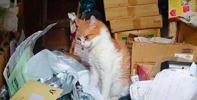 高齢化社会のペット問題…飼い主を亡くし残された猫たちVo.2