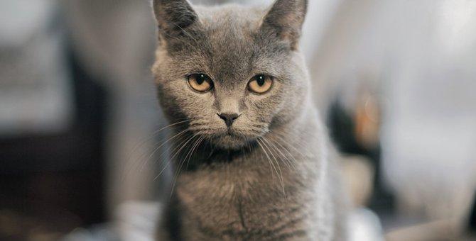 猫がうんちだけ粗相をする理由と対処法