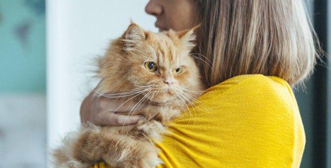 猫にしてはいけない『飼い主のNG態度』5選