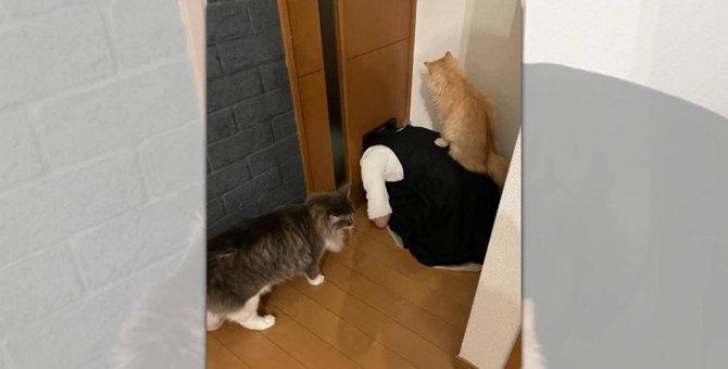 猫ドアで渋滞発生中!その「原因」にニャンとも驚く猫たちが話題