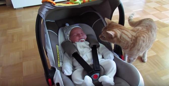 突如お家に赤ちゃんが現れた・・・!小さな赤ちゃんに猫はビビりまくり(笑)(movie)
