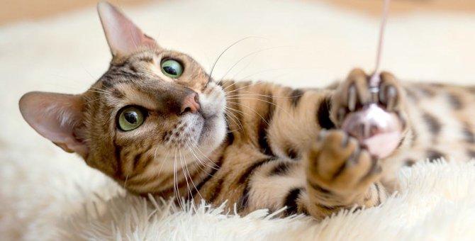 猫の遊び相手をする時間がない…猫がひとりで遊べるおもちゃ5選
