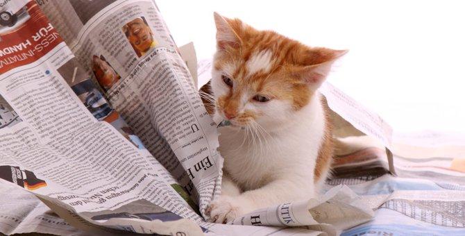 猫が新聞やチラシの上に乗るのはなぜ?猫を困らせずにおろしてあげる対策
