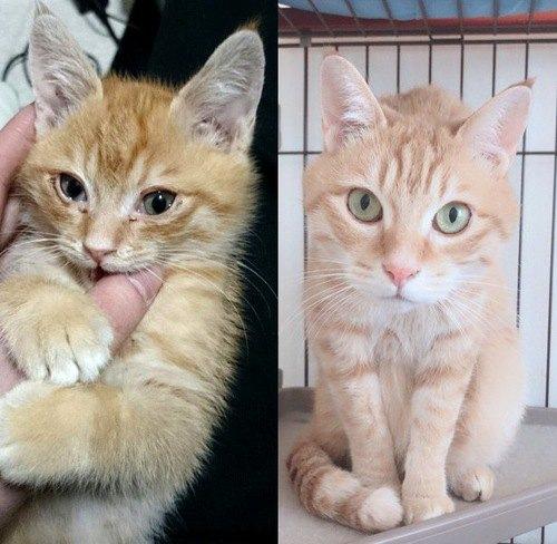 猫のビフォーアフター!子猫から成猫へ、保護されてから変貌を遂げたネコ達