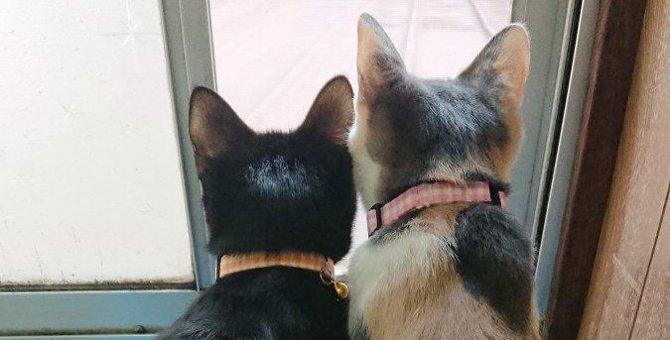 姉妹でニャルソック!先住猫と新米子猫の幸せな出会い♡