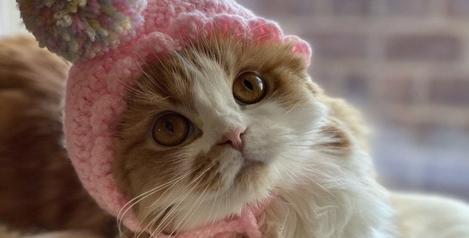猫に最適な『トイレマット』の選び方4つ!誤飲を招く材質に注意!