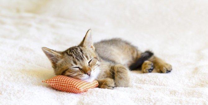 猫の十戒は2種類ある?猫と暮らす人に読んでほしい猫の十戒とは