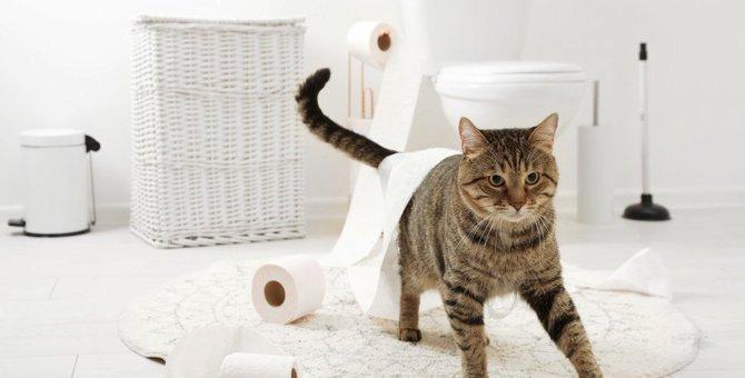 猫の『トイレハイ』について