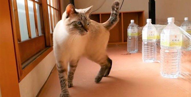目指すはゴール!猫缶を取り戻せ