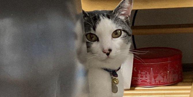 猫が飼い主を『覗き見するとき』の気持ち5選