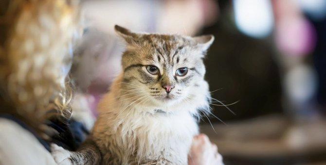 猫が実は『嫌だニャ〜』と思っていること4選!普段の行動がストレスの原因になっているかも?