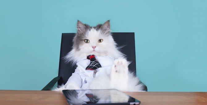 猫にも主従関係ってある?正しくしつけるための5つの方法