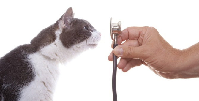 猫から人に伝染する菌と病気の症状や予防法