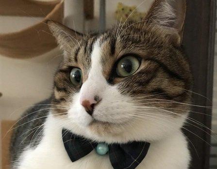ポーカーフェイスな猫の気持ちが分かる5つの体のポイント