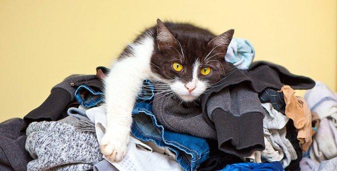 猫が飼い主の洗濯物を持って行ってしまうのは何故?6つの心理