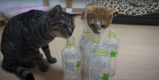 猫ちゃん達とペットボトルで遊んでみた!!