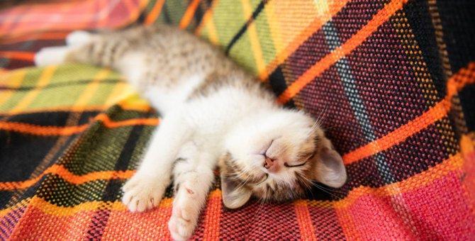 猫が『バンザイ』をして寝る4つの理由