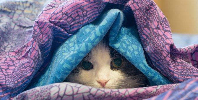 猫の回虫はうつる!寄生虫を発見した時の対処法