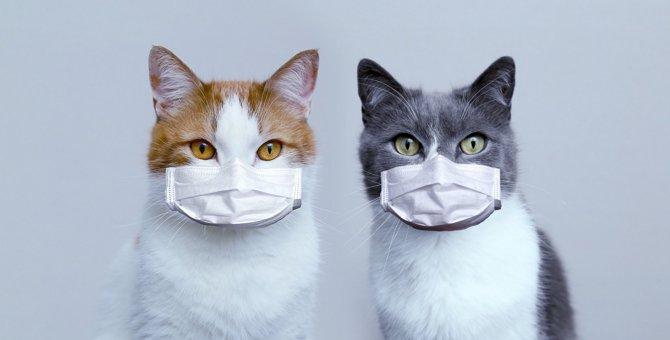 【新型コロナ】猫の「感染事例」まとめ
