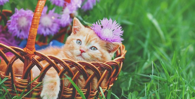 猫にとって危険な『春の行事』のトラブル4選!飼い主が事前にすべき対策とは?