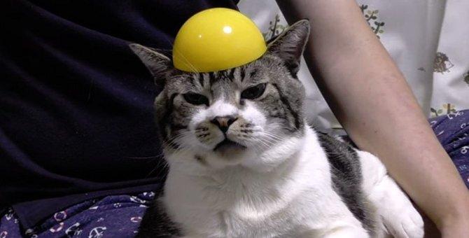 カプセルと猫ちゃんを使ってモノボケ大会!