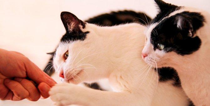 猫にカニカマを与えてはいけない理由