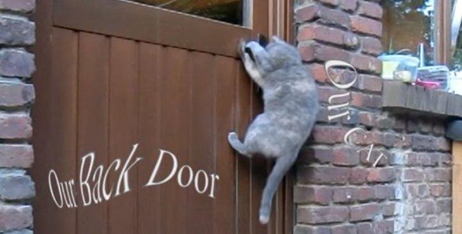 ドアが開かないピンチ!猫ちゃんが発見した解決策とは?