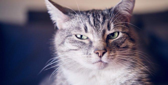 猫が『心を閉ざしている時』する仕草や変化5選