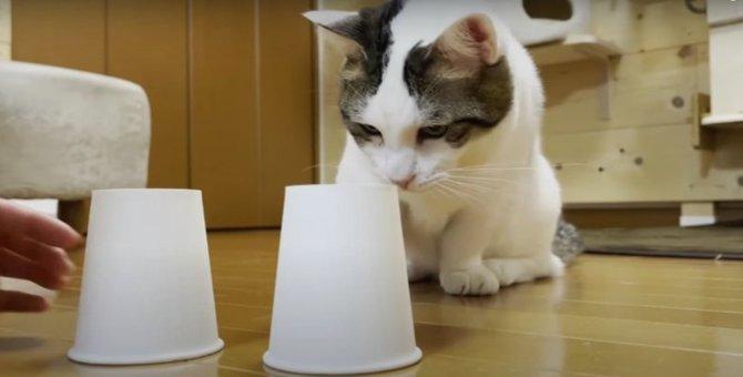 『どっちかにゃ?』猫ちゃんの紙コップチャレンジ