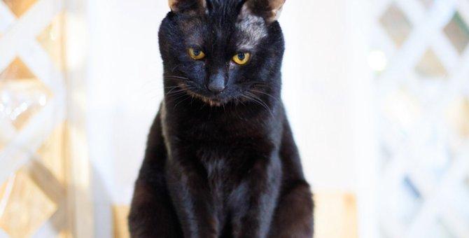 猫が『心から反省したとき』にする行動4選