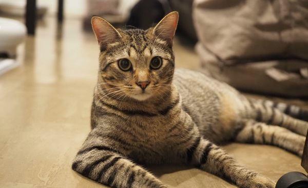 猫の性格は遺伝で決まる?それとも愛情?