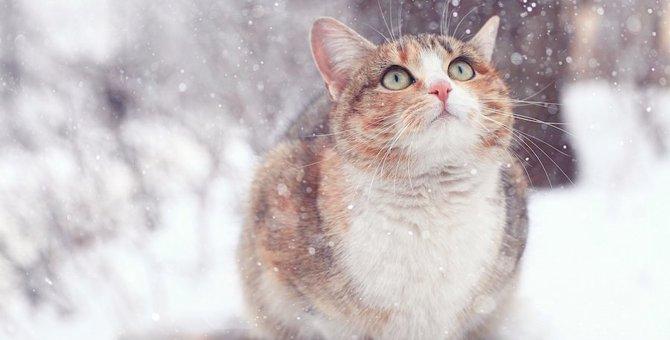 気付いてあげよう!猫の「寒い」サイン8つ