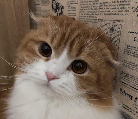 猫が飼い主にしか見せない仕草5つ