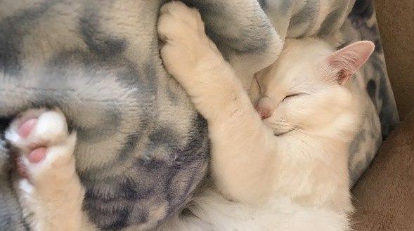猫の寝る場所でわかる『飼い主への信頼度』5選!今すぐ愛猫の位置をチェックしてみよう♡