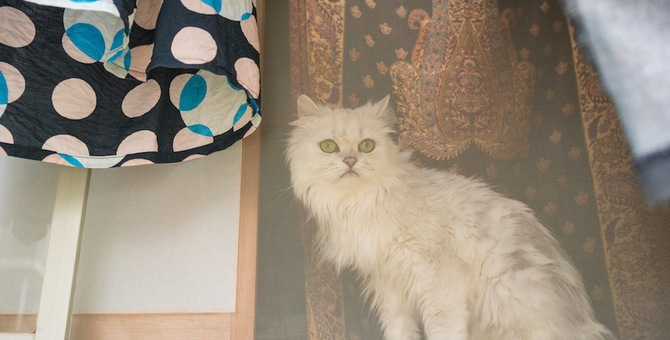 猫が網戸によじ登るのを何とかしたい!対策できる5つの事