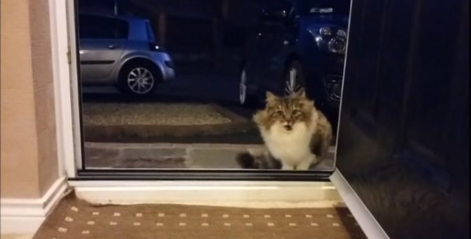 「助けてください!」猫が勇気を出して人間に助けを求めた理由は?
