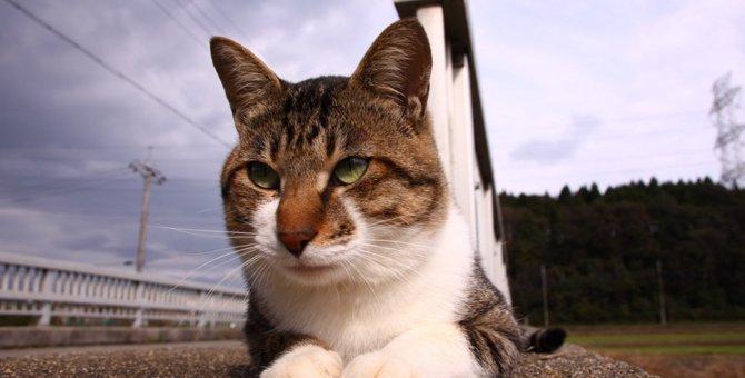 低気圧で体調を崩しがちな猫のための対策4つ