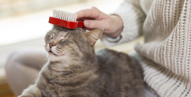 猫ちゃんのブラッシングは日常生活に必要?その訳とは…