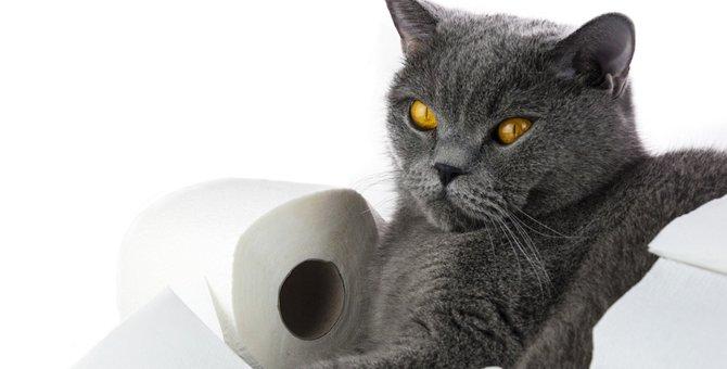 雄猫がスプレーをする4つの意味とやめさせる方法