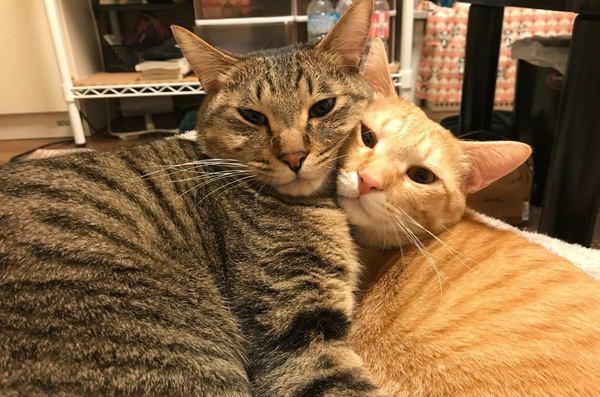 【キュンキュン】仲がいい猫同士がする行動6つ【意外】