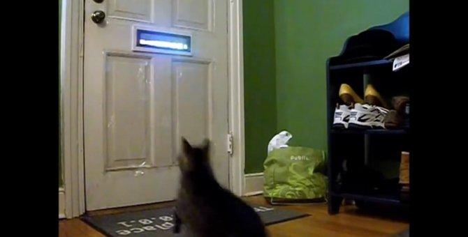 「今日も来たニャ!」郵便物を最速で受け取る猫ちゃん