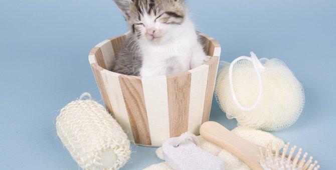 猫をお風呂好きにする4つの方法