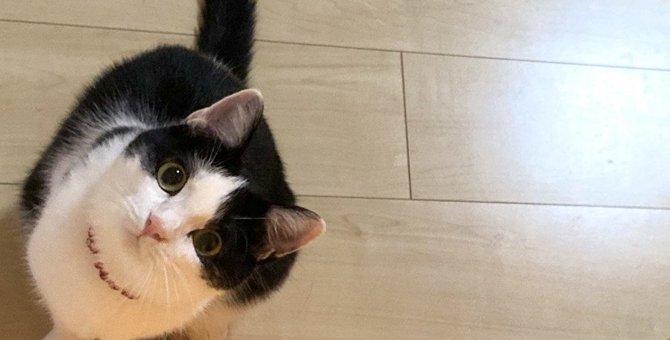 猫が飼い主を「出待ち」する場所4つとその理由